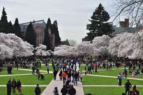 This is the Quad, or Liberal Arts Quadrangle at the University of Washington. The quad is filled with cherry trees and their blossoms can be observed during Spring of each year.
