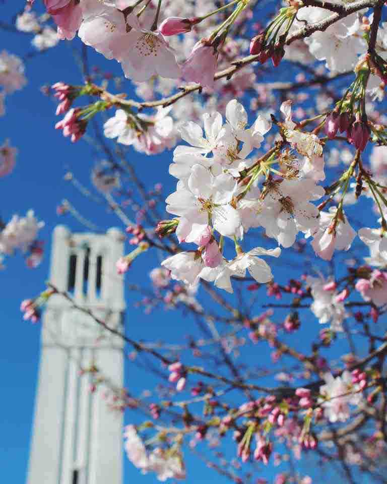 'ncstate Happy first day of Spring, Wolfpack! We know it didn't